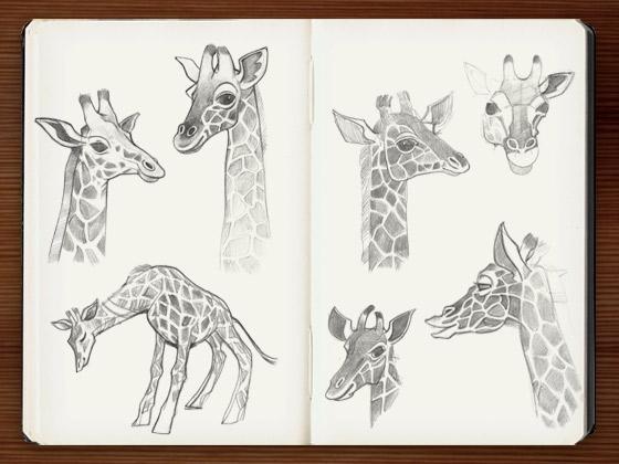 Skizzen und Zeichnungen von Giraffen für den Empathie-Trainer EmpaTrain