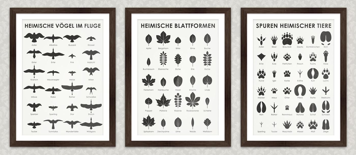 Infografik zum Bestimmen der Blattformen, also der Blätter, von Bäumen wie Apfelbaum, Bergahorn, Birnbaum, Buche, Buchsbaum, Eberesche, Eiche, Erle, Esche, Feldahorn, Hainbuche, Haselstrauch, Kirschbaum, Linde, Pappel, Platane, Robinie, Rosskastanie, Schwarzdorn, Spitzahorn, Stechpalme, Ulme, Weide und Weißdorn.