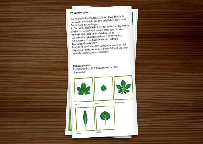 Broschüre zum Asiatischen Laubholzbockkäfer mit illustrierten Blattformen von Rosskastanie, Bergahorn, Birke, Weide und Espe in Grün