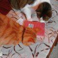 Katzen entdecken das Lily Lux Notizbuch