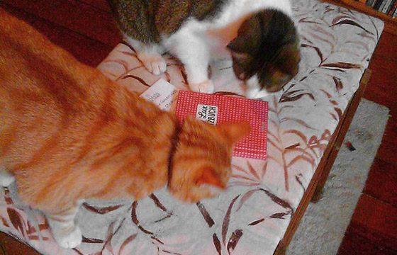 Lily Lux Notizbuch mit den Katzen von Stephanie