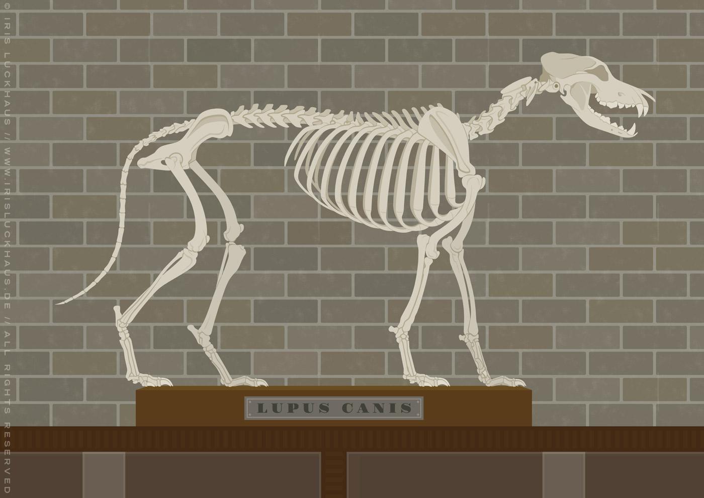 Ausschnitt mit Wolfsskelett aus dem Empathie-Labor für EmpaTrain