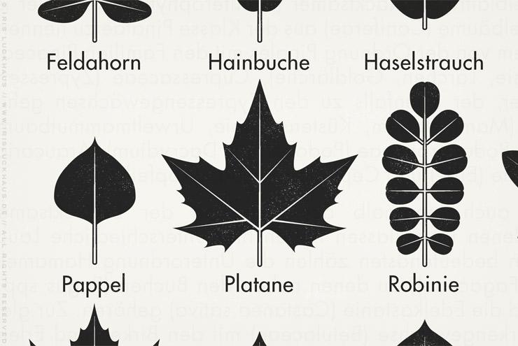 Ausschnitt aus der gezeichneten Infografik zur Bestimmung heimischer Blattformen und der Blätter von Bäumen