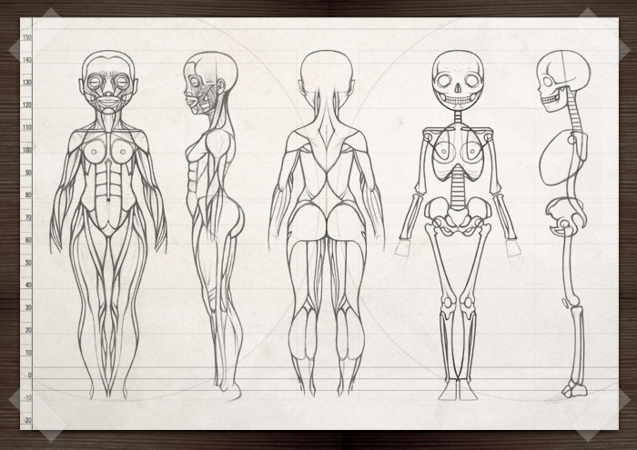 Characterdesign für Lily Lux mit Ansicht vorn, Seite und hinten, Anatomie, Muskeln und Knochen