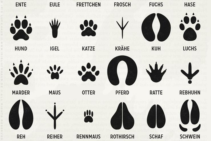 Ausschnitt aus Infografik zur Bestimmung von Tierspuren, den Spuren heimischer Tiere