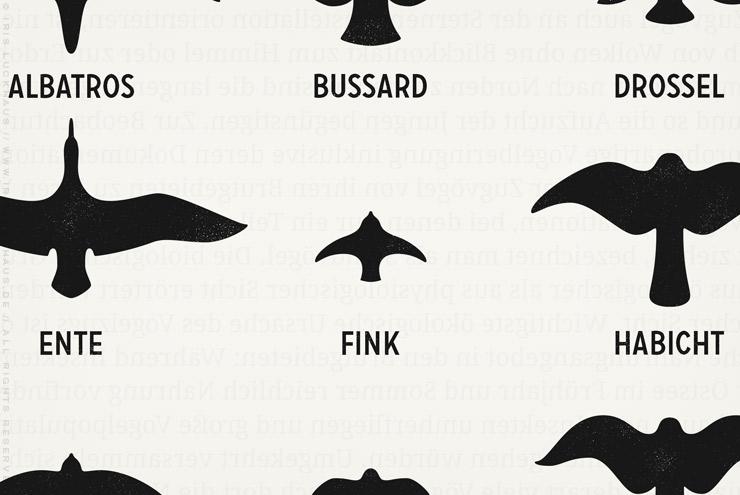 Makro von Infografik zur Bestimmung heimischer Vögel im Fluge anhand ihrer Silhouetten