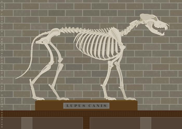Ausschnitt aus der Illustration eines Empathielabors, wo Wissenschaftler mit einem Wolfsskelett Lupus Canis die Formel für Empathie finden, für EmpaTrain