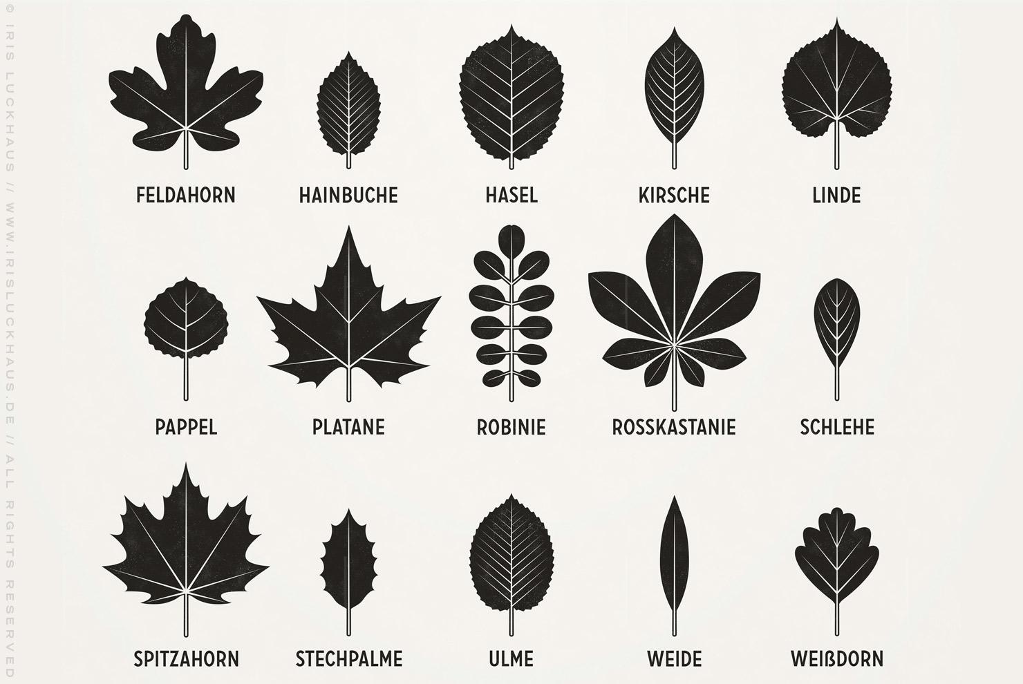 Infografik zur Bestimmung heimischer Blattformen und der Blätter von Bäumen von Iris Luckhaus