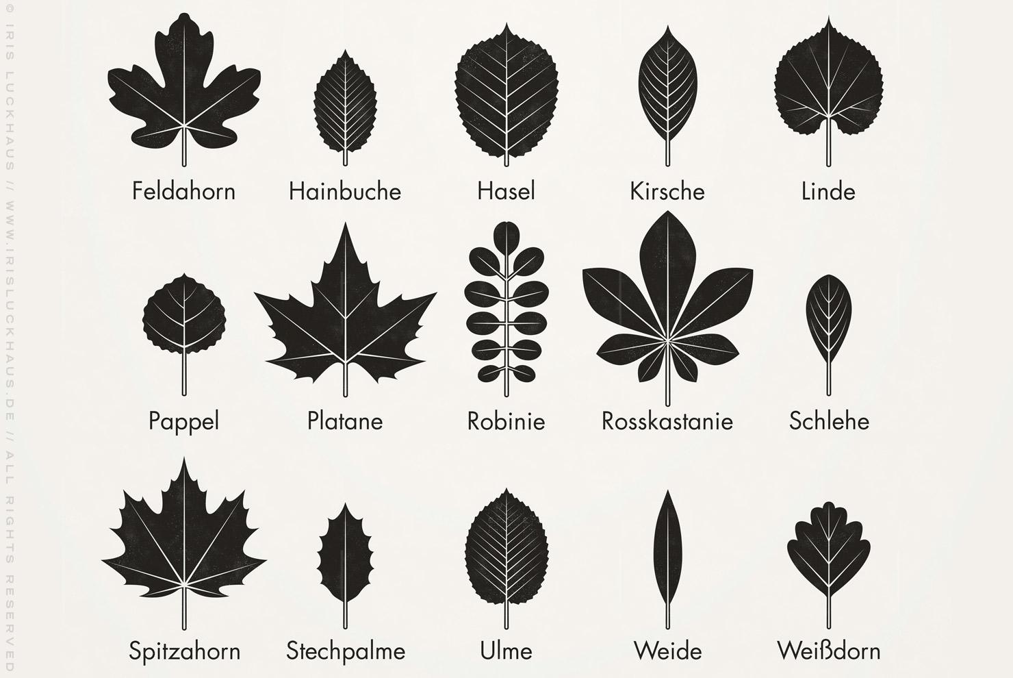 Infografik zur Bestimmung heimischer Blattformen und der Blätter von Bäumen im Retro-Schulbuch-Stil