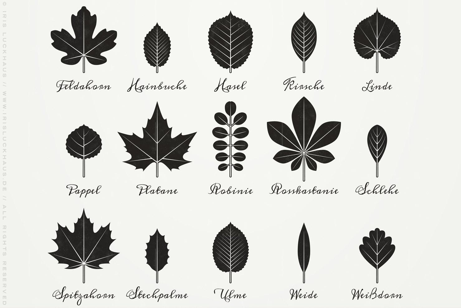 Infografik zur Bestimmung heimischer Blattformen und der Blätter von Bäumen mit Handschrift