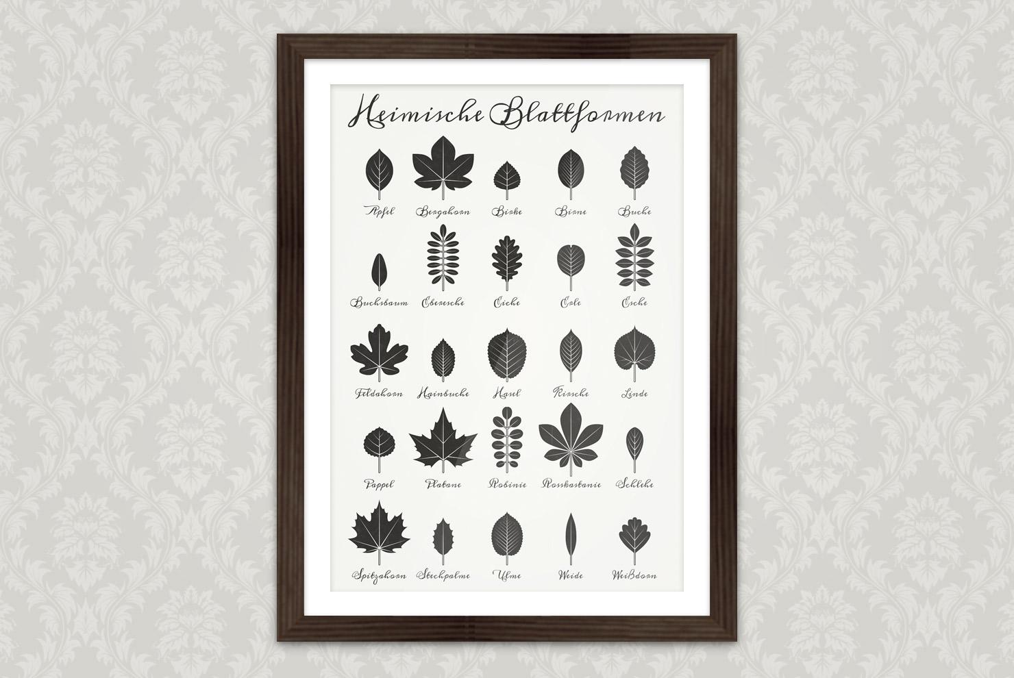 Poster mit einer gezeichneten Infografik zur Bestimmung heimischer Blattformen und der Blätter von Bäumen mit Handschrift