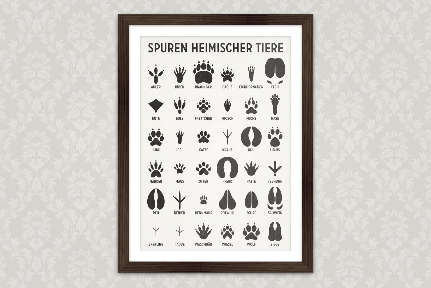 Poster mit Infografik zur Bestimmung von Tierspuren, den Spuren heimischer Tiere, von Iris Luckhaus