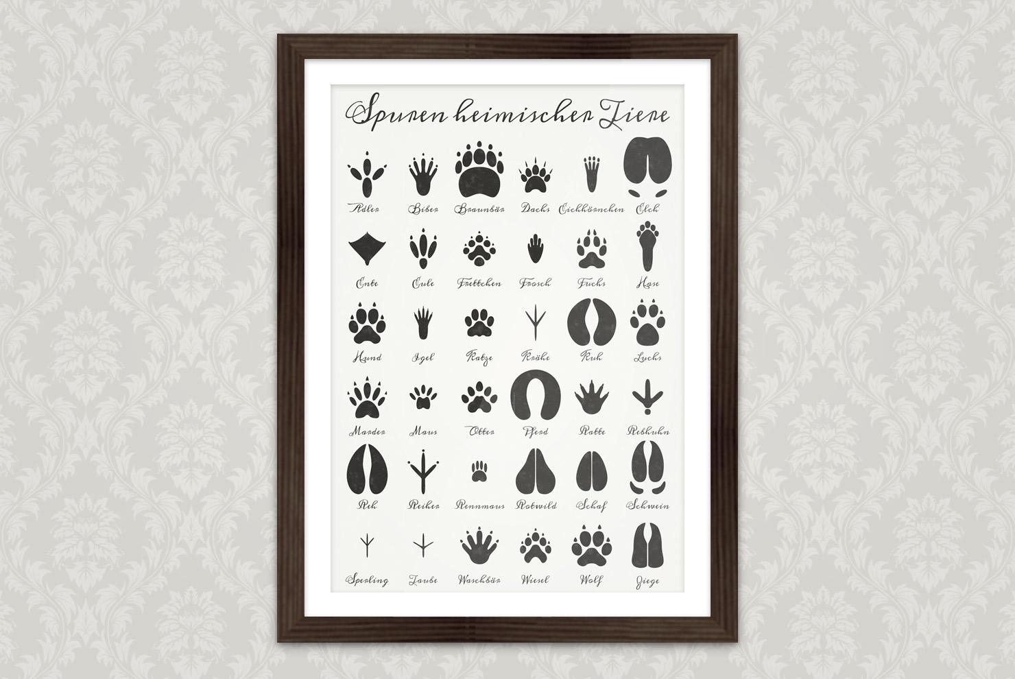 Poster mit Infografik zur Bestimmung von Tierspuren, den Spuren heimischer Tiere, mit Handschrift