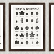 Art Prints | Identification Sheets at Posterlounge