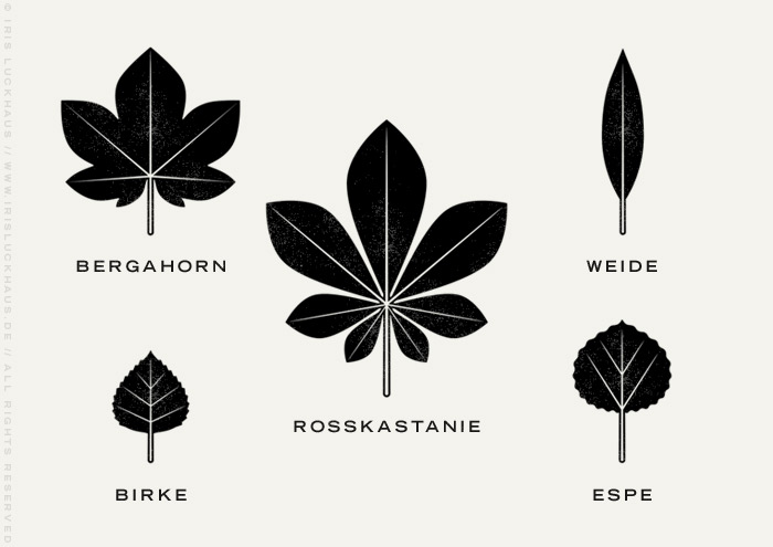 Infografik mit den illustrierten Blattformen von Rosskastanie, Bergahorn, Birke, Weide und Espe für den Waldschutz von Iris Luckhaus