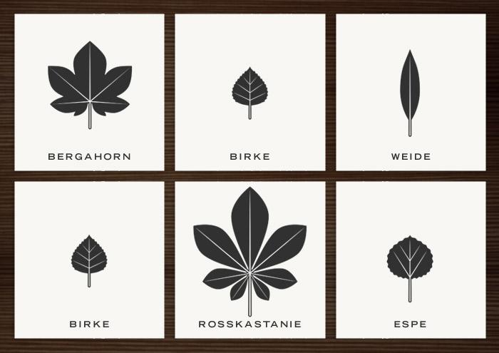 Infografik mit den illustrierten Blattformen von Rosskastanie, Bergahorn, Birke, Weide und Espe für den Waldschutz