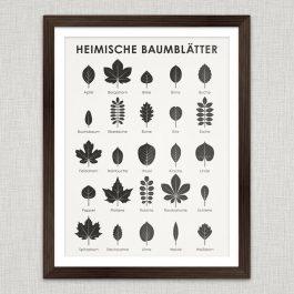 Art Print European Tree Leaves