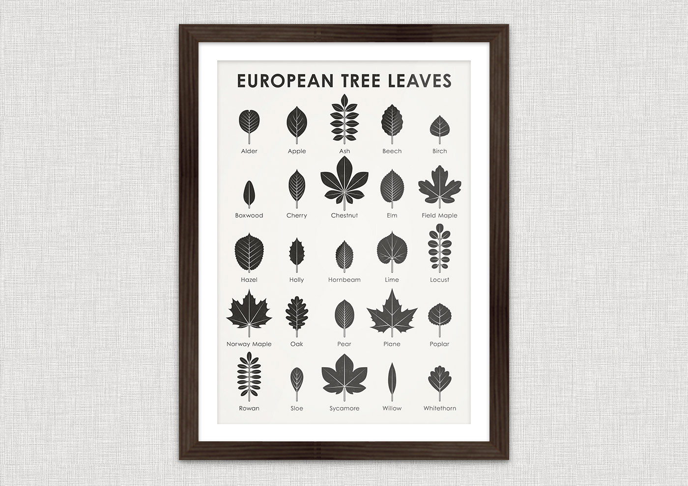 A practical infographic sheet that helps you to easily identify, learn and remember the leaf shapes of 25 common European trees, such as alder, apple, ash, beech, birch, boxwood, cherry, chestnut, elm, field maple, hazel, holly, hornbeam, lime, locust, norway maple, oak, pear, plane, poplar, rowan, sloe, sycamore, willow or whitethorn.