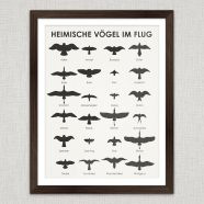 (Deutsch) Art Prints | Birding Wall Chart Poster