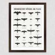 (Deutsch) Art Prints | Birding Wall Chart Poster