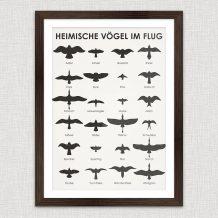 Art Print Field Guide for Birding
