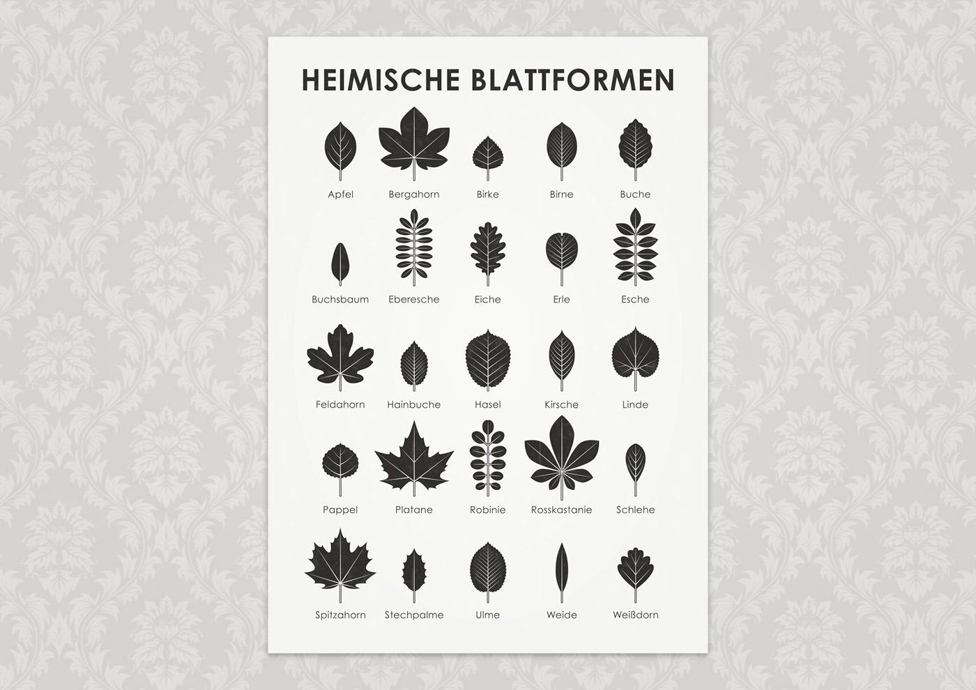 Poster mit Infografik zur Bestimmung heimischer Blattformen und Baumblätter