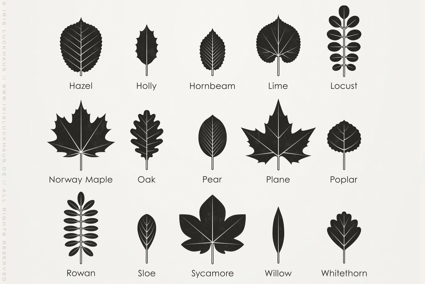 Poster with an infographic as identification sheet for the leaves of European tree, alder, apple, ash, beech, birch, boxwood, cherry, chestnut, elm, field maple, hazel, holly, hornbeam, lime, locust, norway maple, oak, pear, plane, poplar, rowan, sloe, sycamore, willow, whitethorn