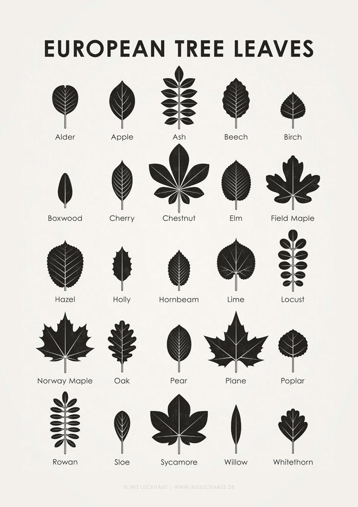 European Tree Leave Shapes Poster by Iris Luckhaus