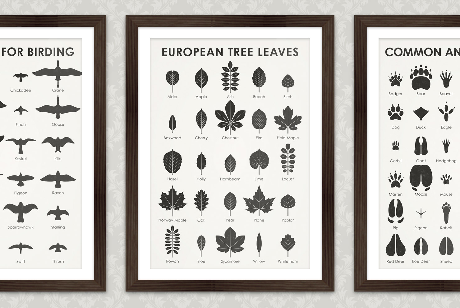Poster with an infographic as identification sheet for the leaves of European trees such as alder, apple, ash, beech, birch, boxwood, cherry, chestnut, elm, field maple, hazel, holly, hornbeam, lime, locust, norway maple, oak, pear, plane, poplar, rowan, sloe, sycamore, willow, whitethorn