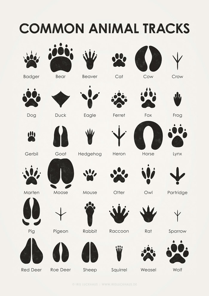 Common Animal Tracks Poster by Iris Luckhaus