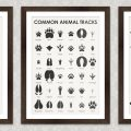 Poster Common Animal Tracks