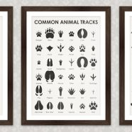 Art Prints | Identification Sheets in English