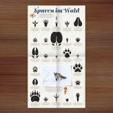 Veröffentlichung | Tierspuren im Waldstück Magazin