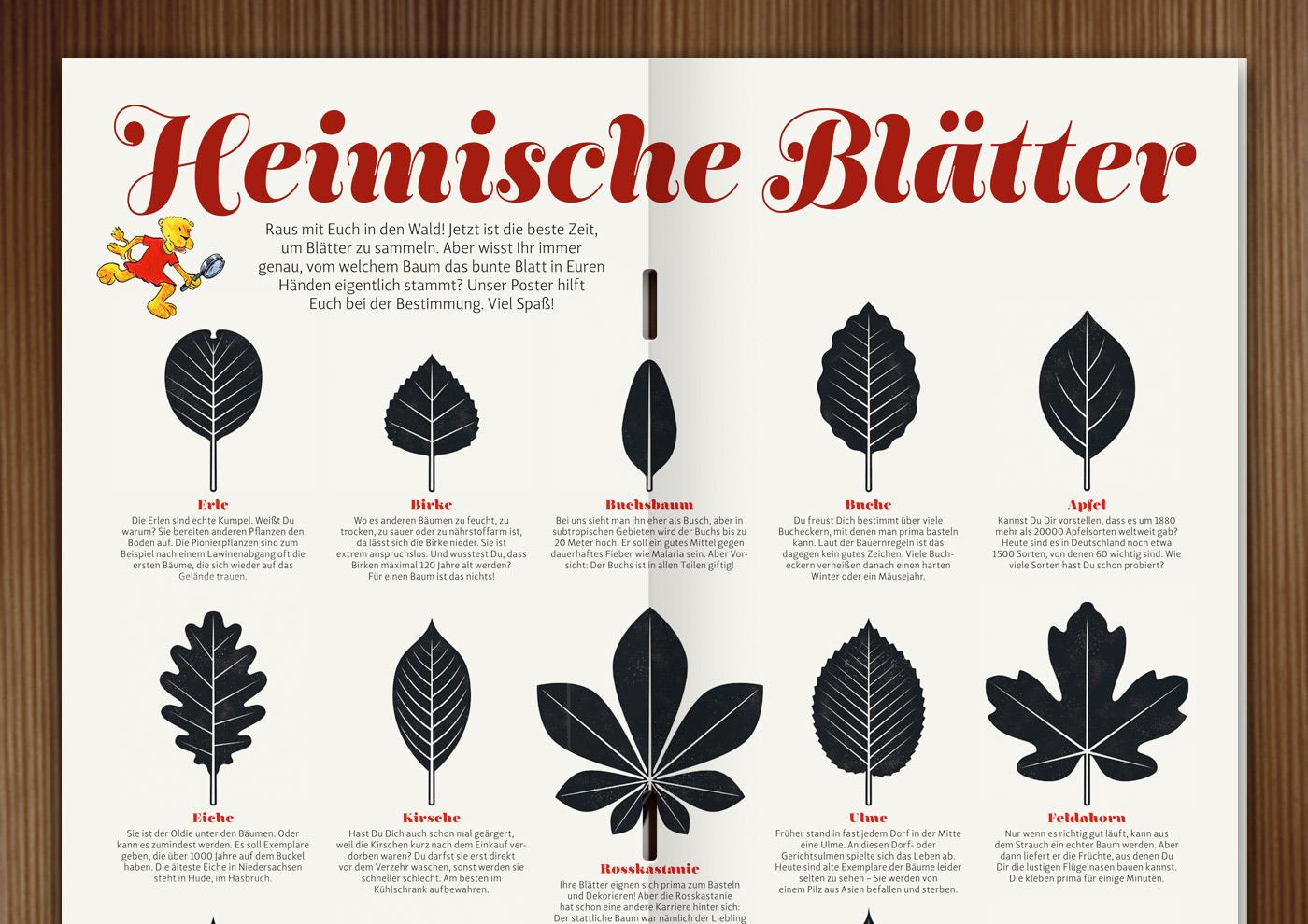 Blattformen im Waldstück-Magazin der Niedersächsischen Landesforste