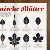Common Leaf Shapes in Waldstück Magazine