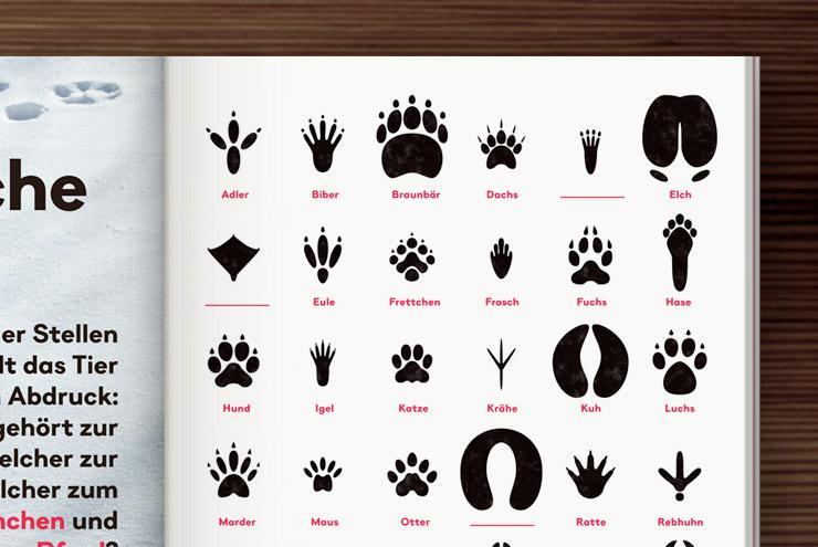 Tierspuren Grafik mit Bestimmungsbogen und Rätsel von Iris Luckhaus für SZ Familie