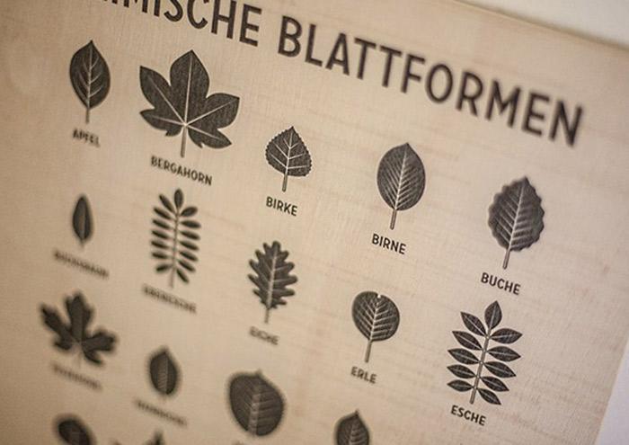 Infografik Poster Blattformen bei Always Like A Feather