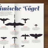 Veröffentlichung | Vögel im Waldstück Magazin