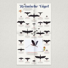 "Waldstück-Poster ""Heimische Vögel"""