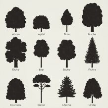Identifying Tree Shapes