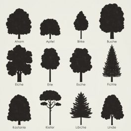 Identifying Tree Species