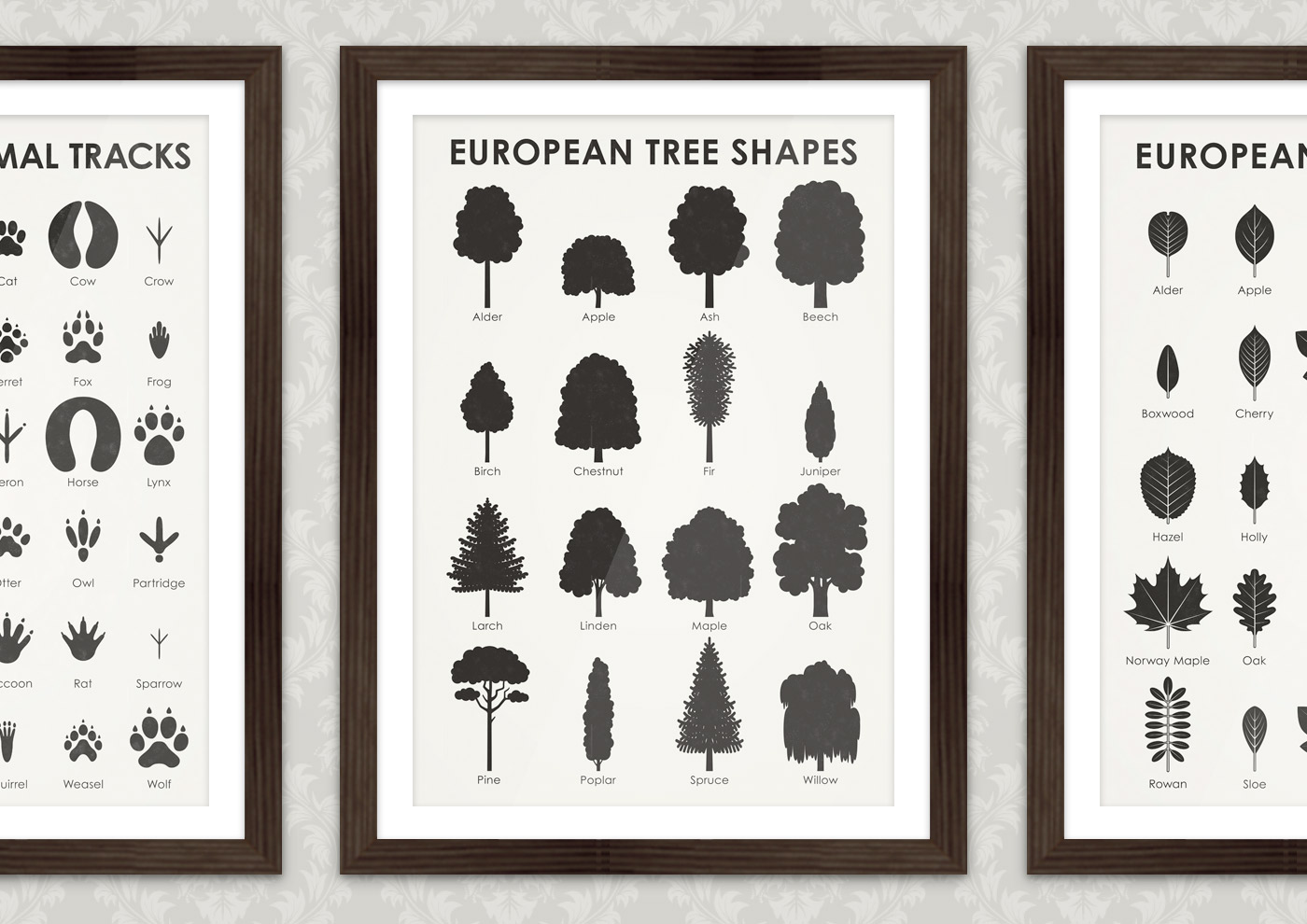A practical infographic wal chart sheet that helps you to easily identify, learn and remember the typical shapes of 16 common European tree species, such as alder, apple, ash, beech, birch, chestnut, fir, juniper, larch, linde, maple, oak, pine, poplar, spruce, sycamore and willow