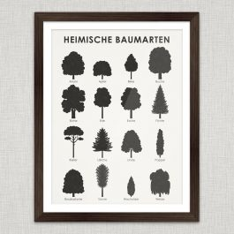 Art Print Tree Species