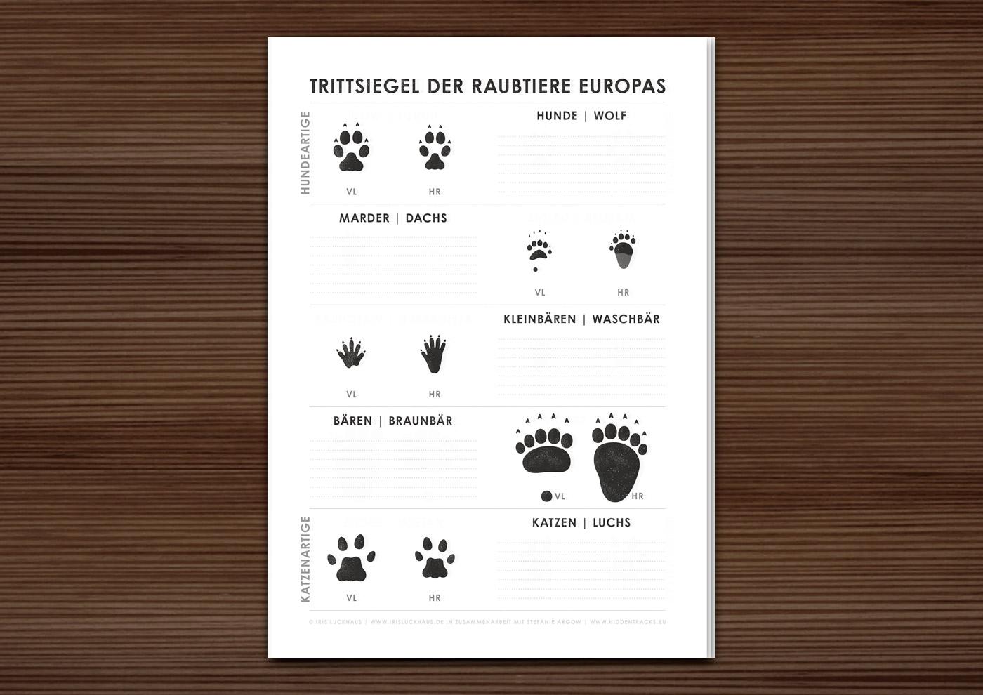Arbeitsbogen Trittsiegel der Raubtiere Europas mit den Spuren von Hundeartigen wie Wolf, Dachs, Waschbär, Braunbär und Katzenartigen wie Luchs in Zusammenarbeit mit Stefanie Argow vo Hidden Tracks