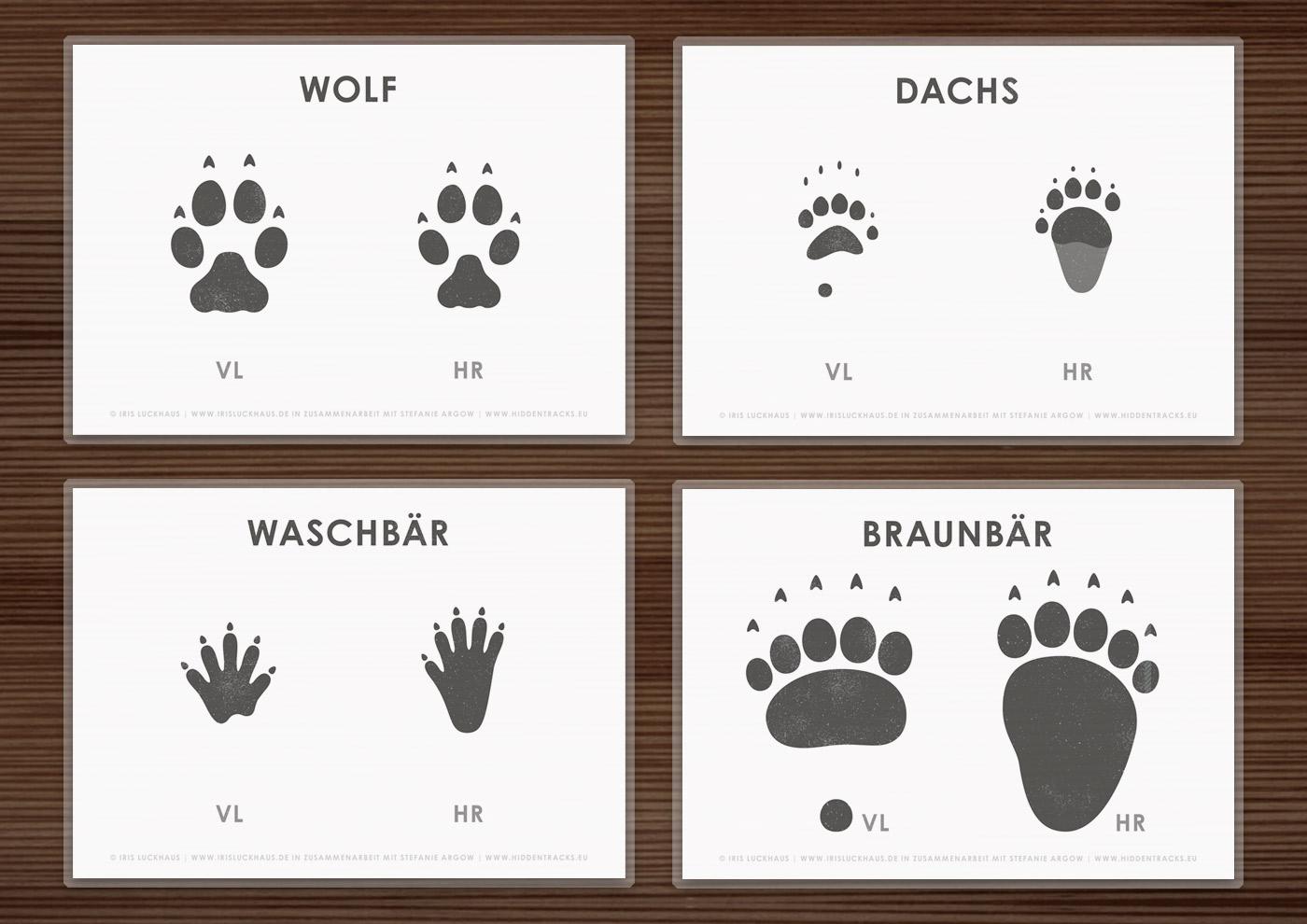 Arbeitsbogen Trittsiegel der Raubtiere Europas mit den Spuren von Hundeartigen wie Wolf, Dachs, Waschbär, Braunbär und Katzenartigen wie Luchs in Zusammenarbeit mit Stefanie Argow vo Hidden