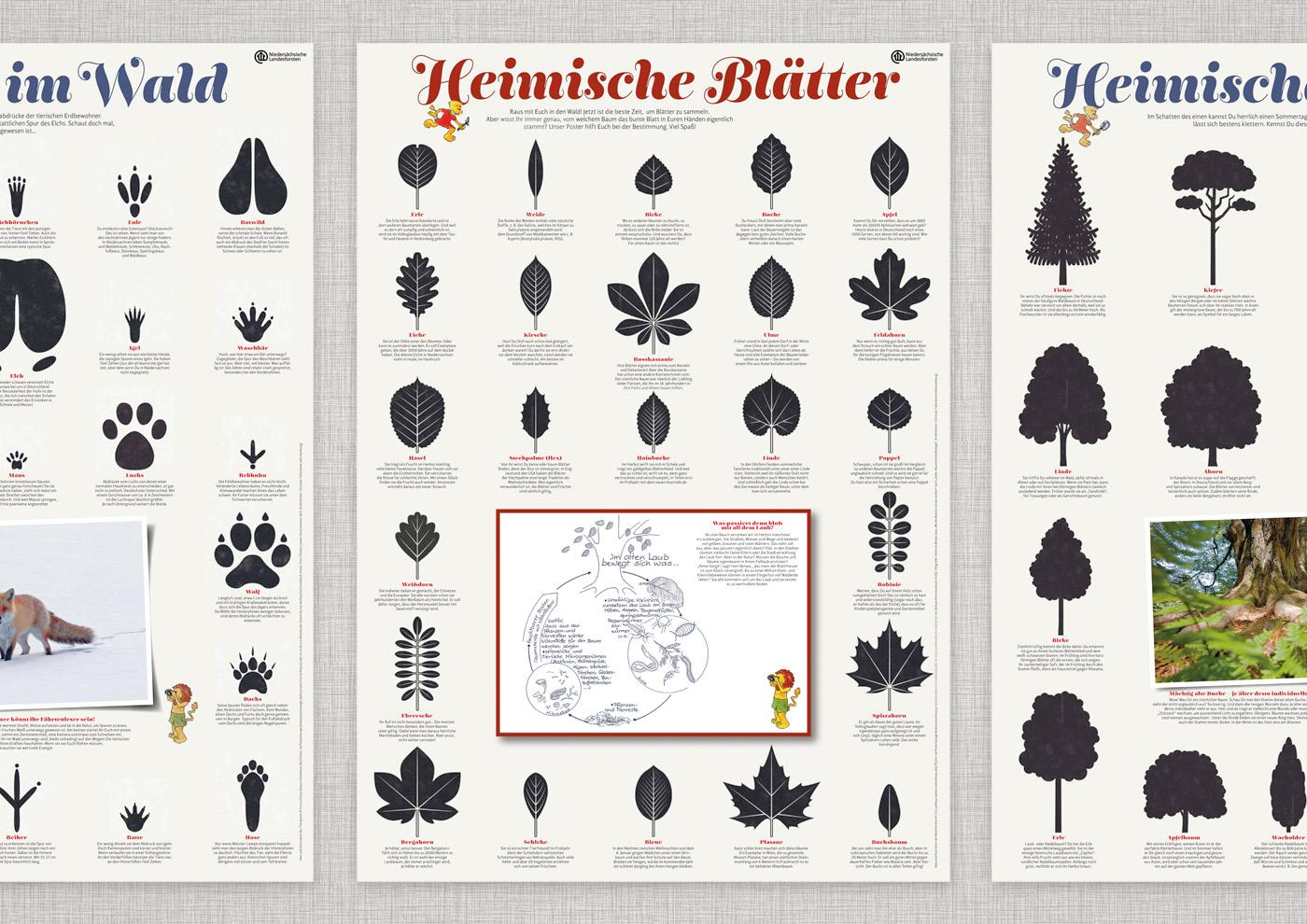 Lernposter mit Baumarten, Tierspuren, Flugvögeln und Baumformen für die Waldpädagogik der Niedersächsischen Landesforsten