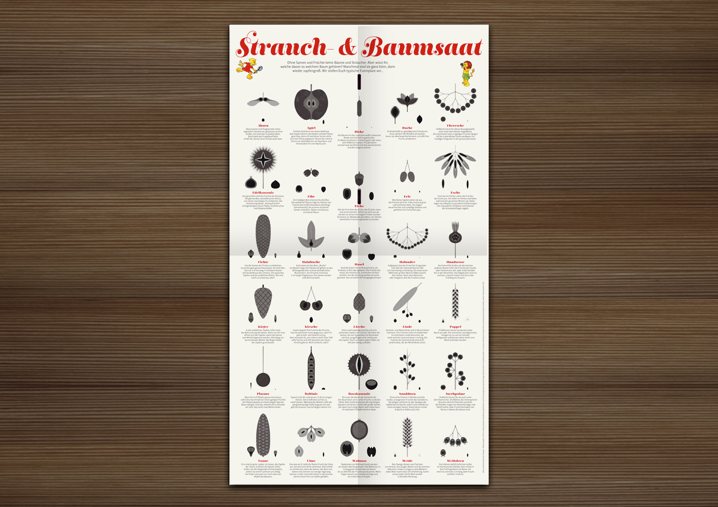 A practical infographic chart sheet that helps you to easily identify, learn and remember the fruits, nuts, cones and seeds of trees and shrubs like alder, apple, ash, beech, birch, buckeye, buckthorn, cherry, chestnut, dogrose (rose-hips), elder (berries), elm, fir, hazel, holly, hornbeam, larch, linden/lime, locust, maple, oak (acorns), pine (nuts), plane, poplar, rowan, sloe, spruce, sycamore, walnut, willow and yew im Waldstück-Magazin der Niedersächsischen Landesforste