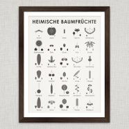 Art Prints | Identification Sheets with Tree Fruits