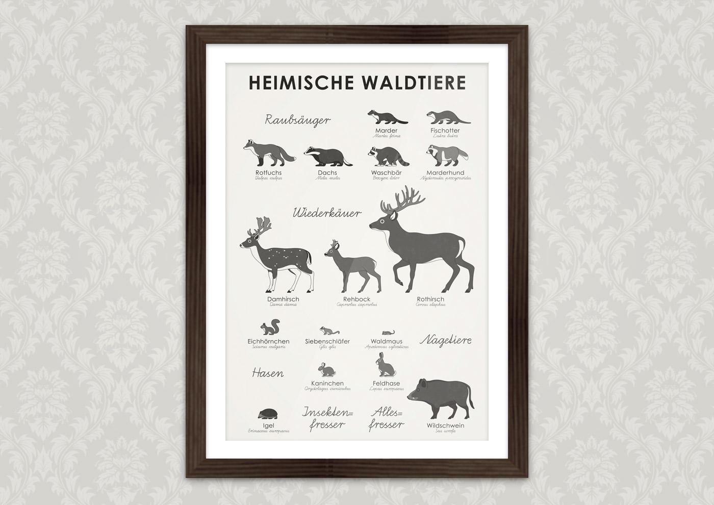 Heimische Waldtiere Bestimmen und Erkennen mit Form, Zeichnung und Habitus von Eichhörnchen, Hase, Igel, Kaninchen, Siebenschläfer, Waldmaus, Damhirsch, Wildschwein, Rehbock, Rothirsch, Dachs, Fischotter, Fuchs, Marder, Marderhund und Waschbär als Poster oder Kunstdruck von Iris Luckhaus