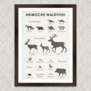 (Deutsch) Art Prints | Identification Sheets with Forest Animals